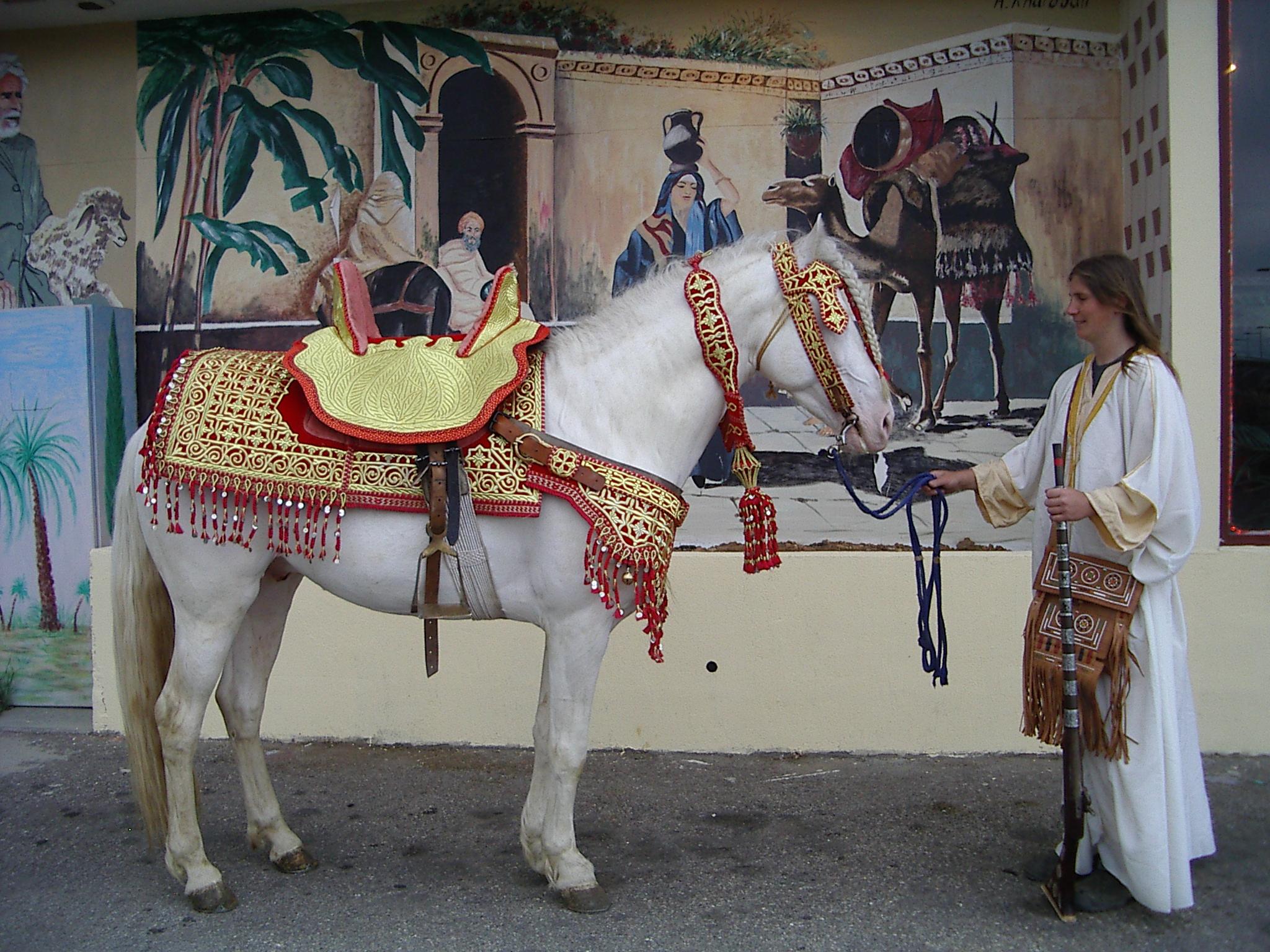 cheval louer - Location De Chameau Pour Mariage